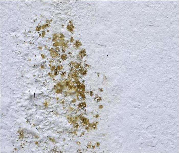 Mold Remediation What should you know about Mold?