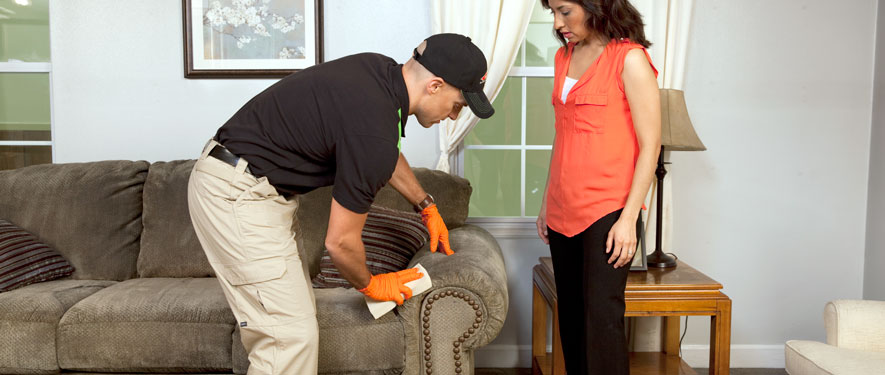 Romulus, MI carpet upholstery cleaning